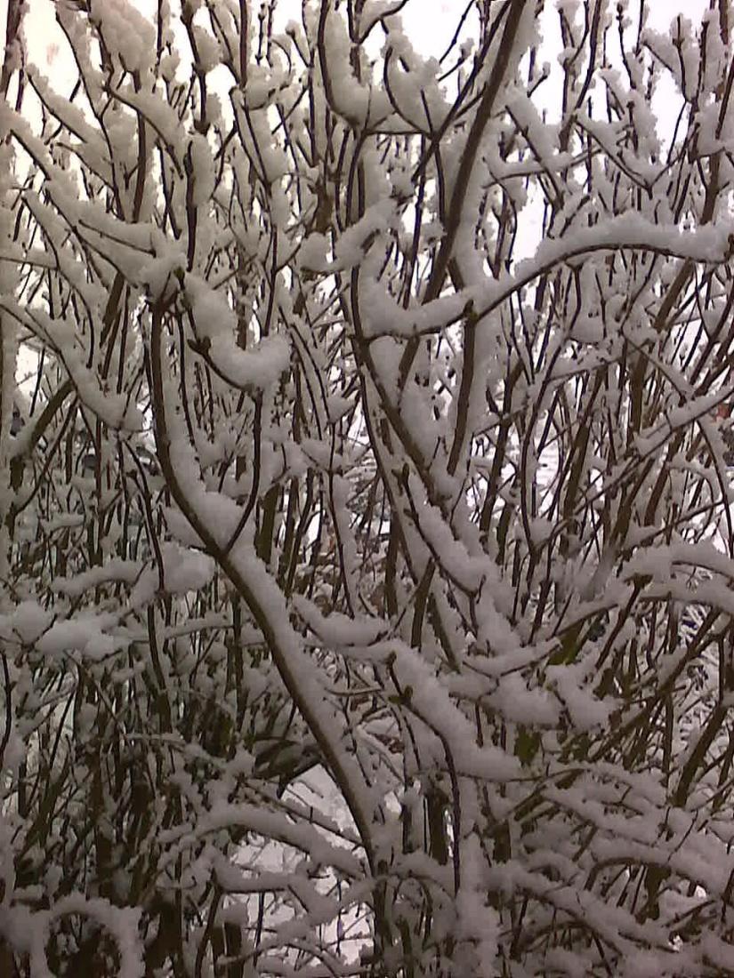 Snow Jan 13
